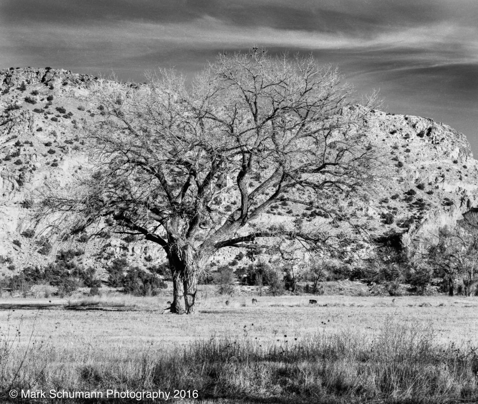 Lone Tree - Chili, NM