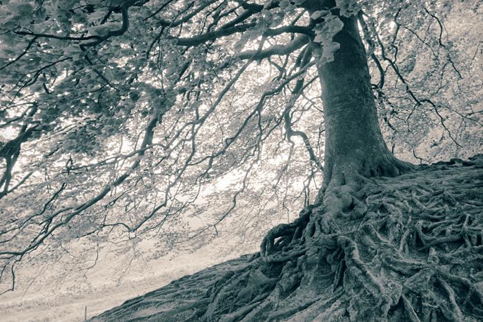 Spangler - Roots-DaneSpangler